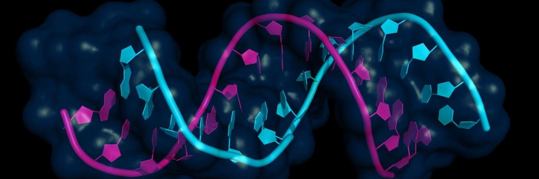 RNA Modifies DNA