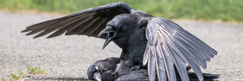 Conscious Birds